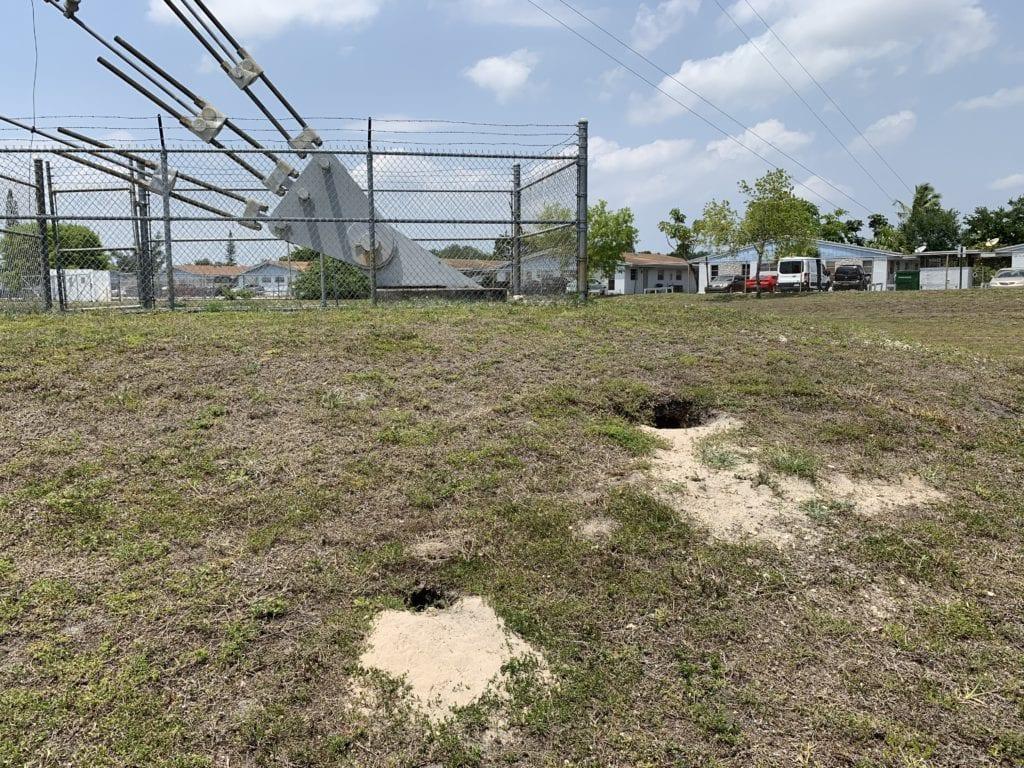 Florida Burrowing Owl Environmental Services