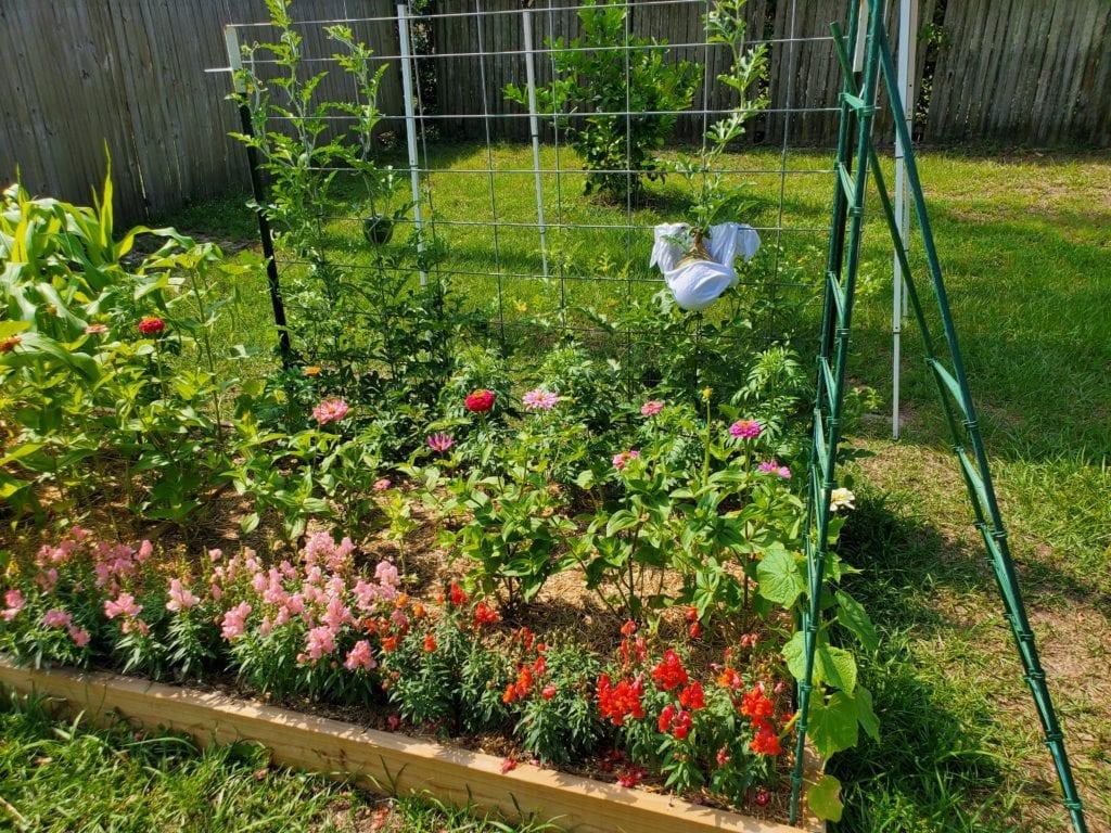Floyd Garden